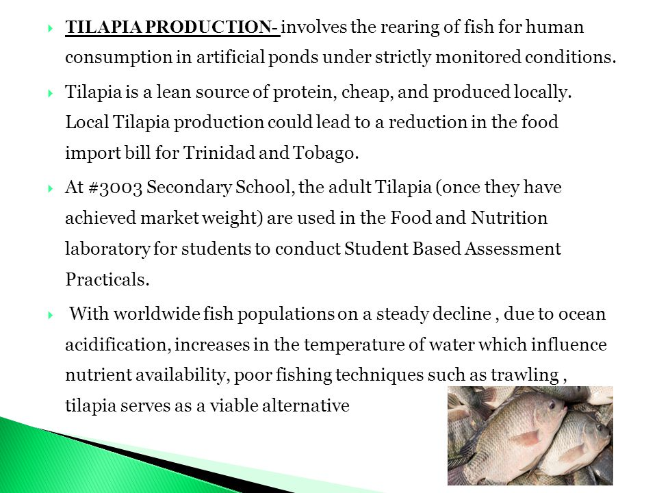  TILAPIA PRODUCTION- involves the rearing of fish for human consumption in artificial ponds under strictly monitored conditions.  Tilapia is a lean