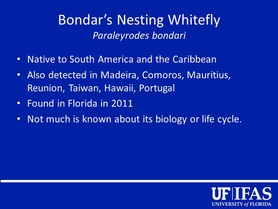 Distribution Bondar's Nesting Whitefly Red = Detected in 7 counties so far in southern Florida Yellow = predicted distribution in Florida Map is based on detection records provided by FDACS-DPI (June 2013).