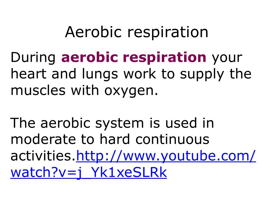 Aerobic respiration During aerobic respiration your heart and lungs work to supply the muscles with oxygen.