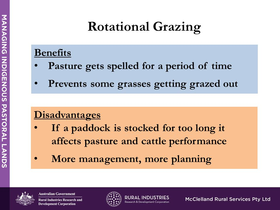 Rotational Grazing Benefits Pasture gets spelled for a period of time Prevents some grasses getting grazed out Disadvantages If a paddock is stocked for too long it affects pasture and cattle performance More management, more planning