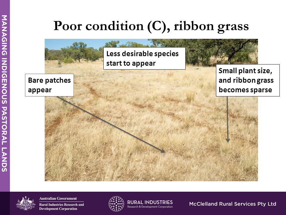 Poor condition (C), ribbon grass Bare patches appear Small plant size, and ribbon grass becomes sparse Less desirable species start to appear