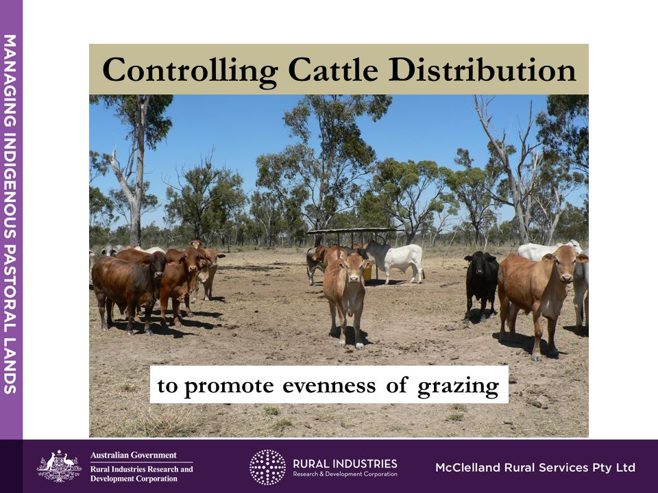 Controlling Cattle Distribution to promote evenness of grazing