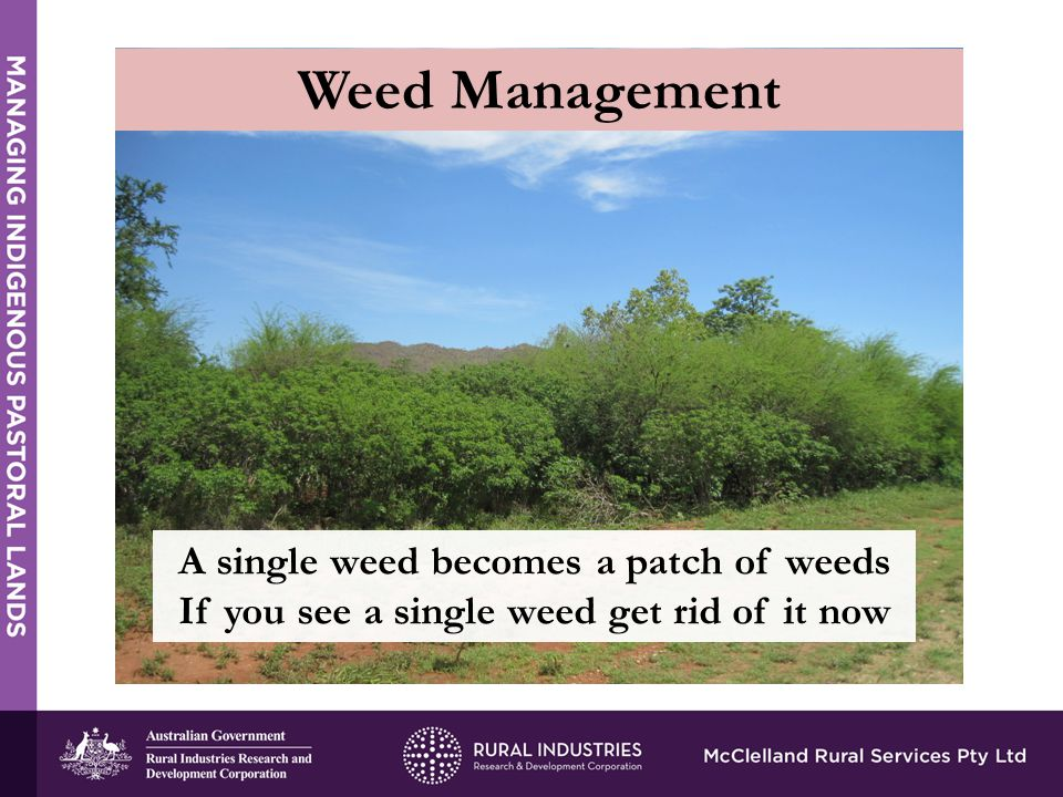 Weed Management A single weed becomes a patch of weeds If you see a single weed get rid of it now