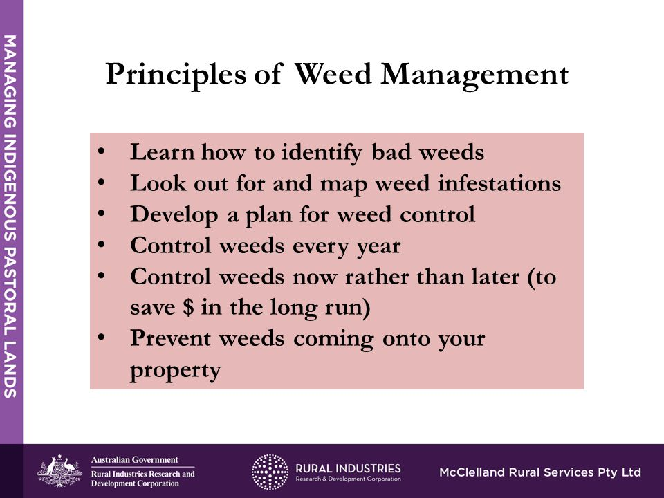 Principles of Weed Management Learn how to identify bad weeds Look out for and map weed infestations Develop a plan for weed control Control weeds every year Control weeds now rather than later (to save $ in the long run) Prevent weeds coming onto your property