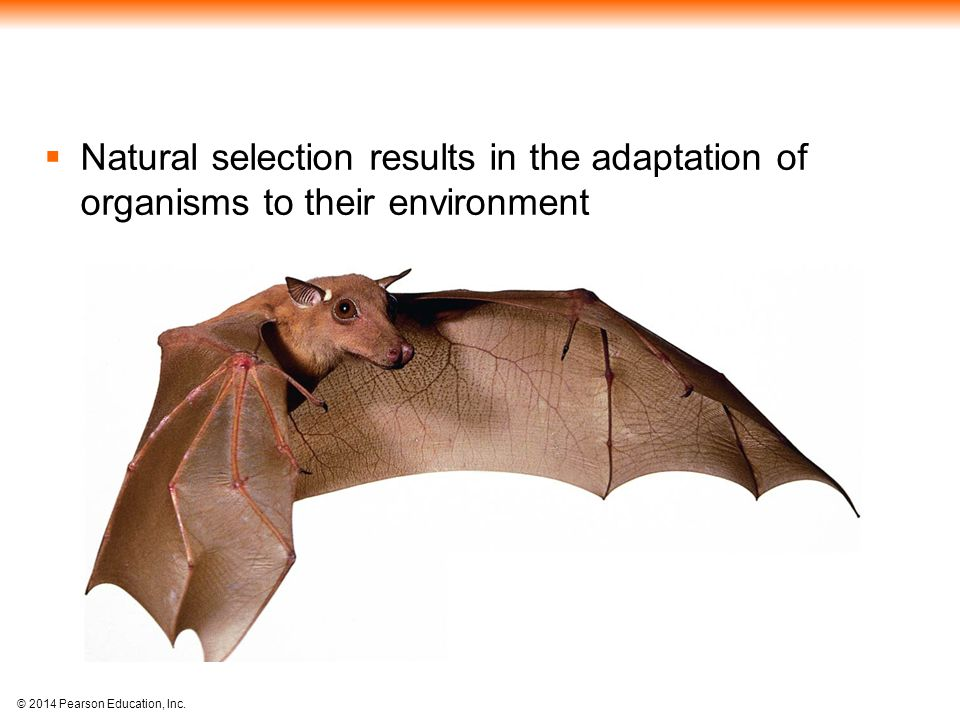 © 2014 Pearson Education, Inc.  Natural selection results in the adaptation of organisms to their environment