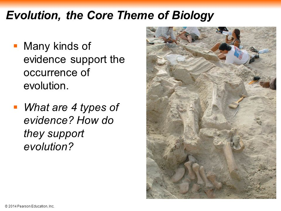 © 2014 Pearson Education, Inc. Evolution, the Core Theme of Biology  Many kinds of evidence support the occurrence of evolution.  What are 4 types o