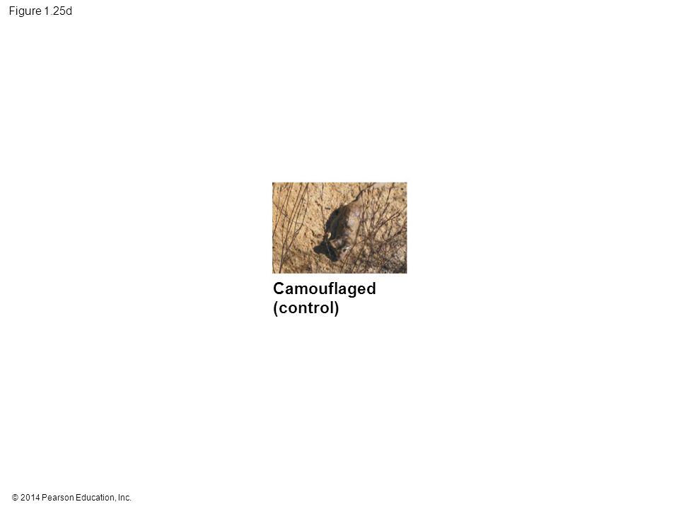 © 2014 Pearson Education, Inc. Figure 1.25d Camouflaged (control)