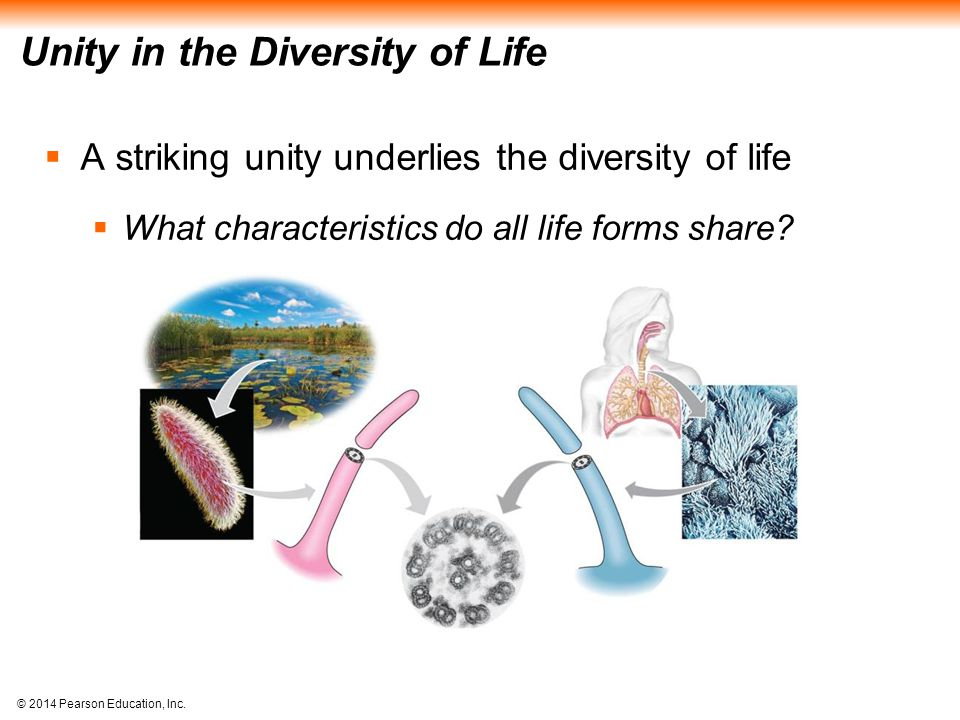 © 2014 Pearson Education, Inc. Unity in the Diversity of Life  A striking unity underlies the diversity of life  What characteristics do all life fo