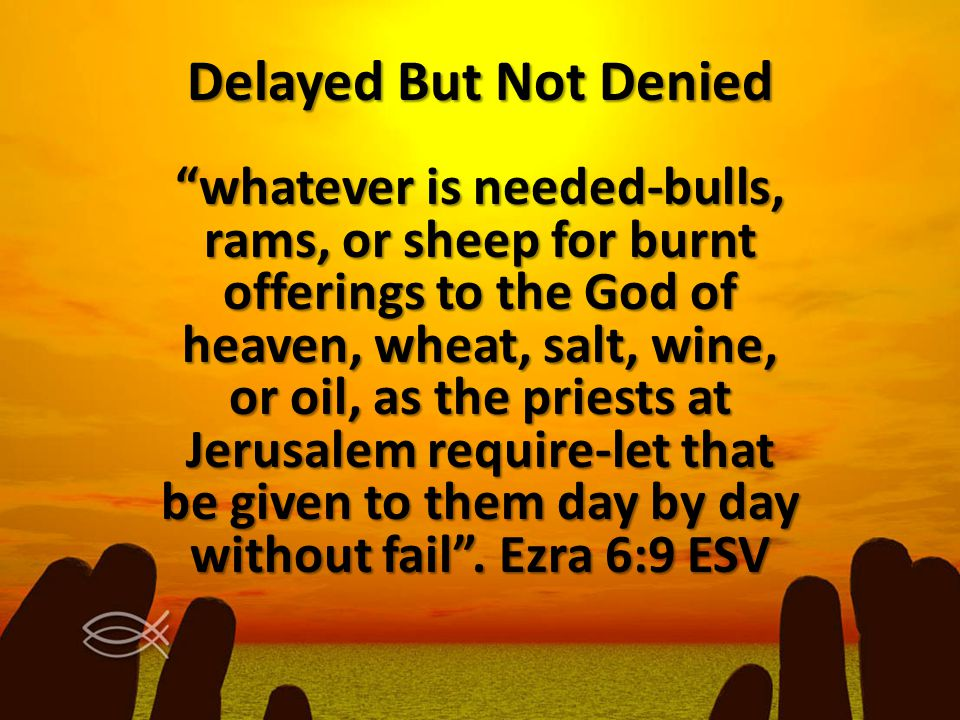 """Delayed But Not Denied """"whatever is needed-bulls, rams, or sheep for burnt offerings to the God of heaven, wheat, salt, wine, or oil, as the priests a"""