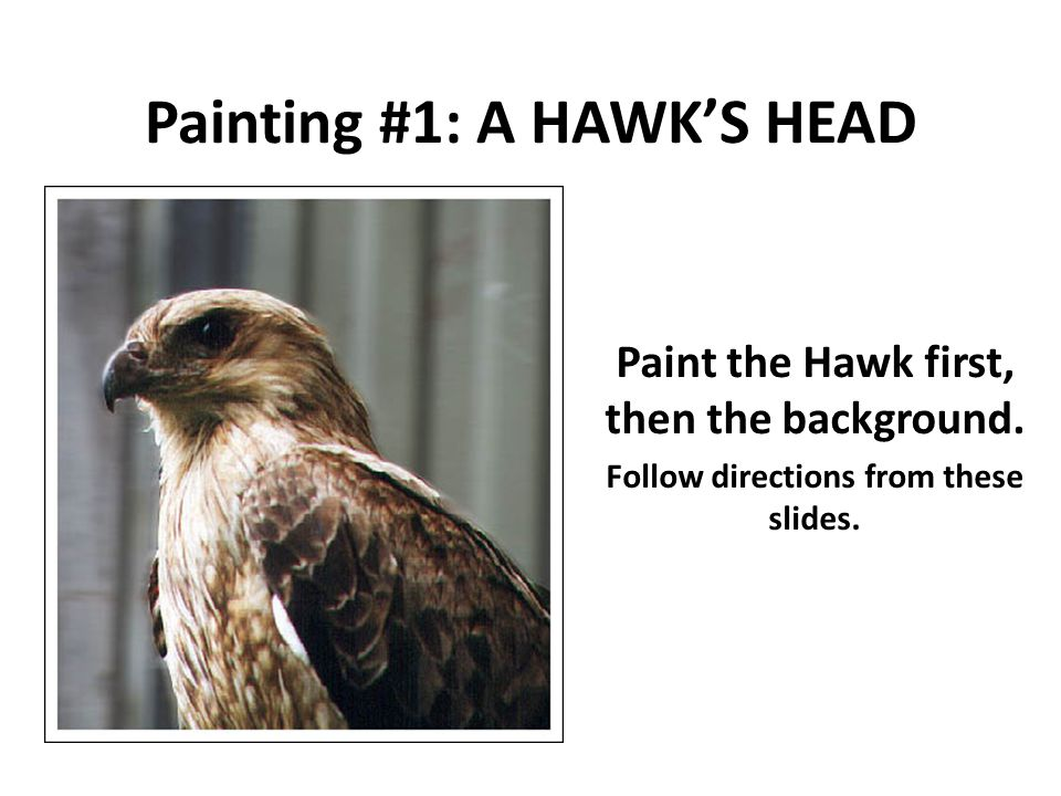Painting #1: A HAWK'S HEAD Paint the Hawk first, then the background.