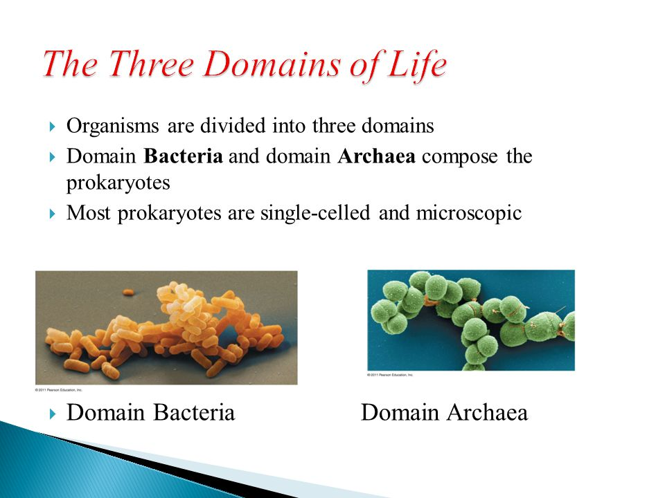  Organisms are divided into three domains  Domain Bacteria and domain Archaea compose the prokaryotes  Most prokaryotes are single-celled and micro