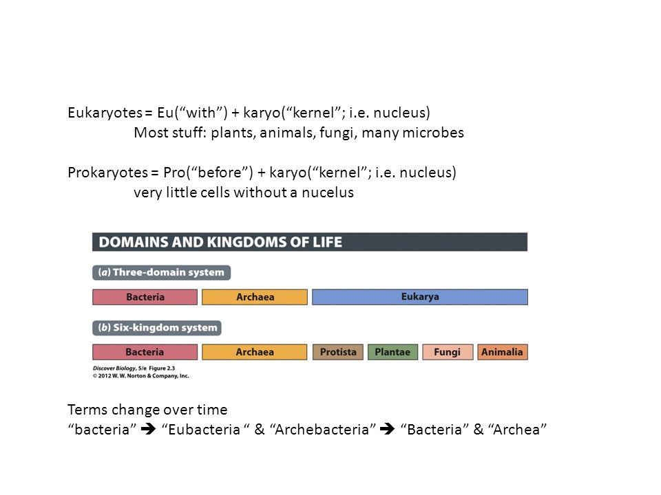 Eukaryotes = Eu( with ) + karyo( kernel ; i.e.