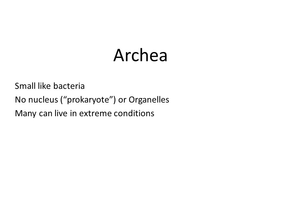 Archea Small like bacteria No nucleus ( prokaryote ) or Organelles Many can live in extreme conditions