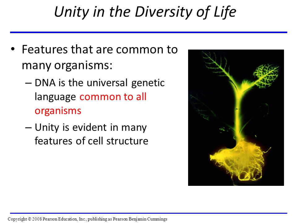 Unity in the Diversity of Life Features that are common to many organisms: – DNA is the universal genetic language common to all organisms – Unity is evident in many features of cell structure Copyright © 2008 Pearson Education, Inc., publishing as Pearson Benjamin Cummings