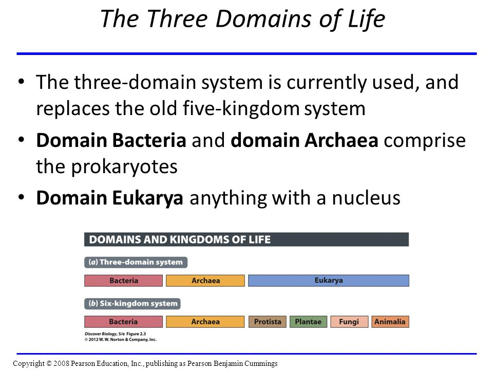 The Three Domains of Life The three-domain system is currently used, and replaces the old five-kingdom system Domain Bacteria and domain Archaea comprise the prokaryotes Domain Eukarya anything with a nucleus Copyright © 2008 Pearson Education, Inc., publishing as Pearson Benjamin Cummings
