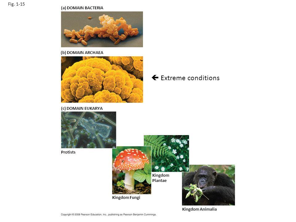 Fig. 1-15 (a) DOMAIN BACTERIA (b) DOMAIN ARCHAEA (c) DOMAIN EUKARYA Protists Kingdom Fungi Kingdom Plantae Kingdom Animalia  Extreme conditions
