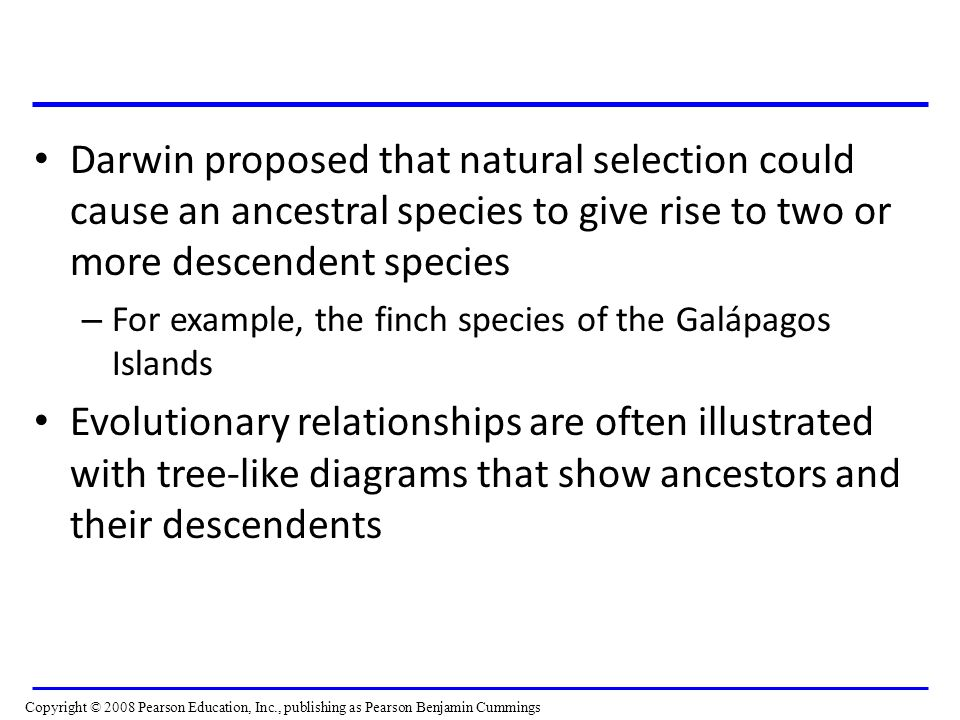 Darwin proposed that natural selection could cause an ancestral species to give rise to two or more descendent species – For example, the finch species of the Galápagos Islands Evolutionary relationships are often illustrated with tree-like diagrams that show ancestors and their descendents Copyright © 2008 Pearson Education, Inc., publishing as Pearson Benjamin Cummings