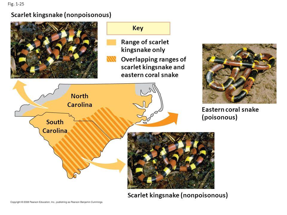 Fig. 1-25 South Carolina North Carolina Key Scarlet kingsnake (nonpoisonous) Eastern coral snake (poisonous) Range of scarlet kingsnake only Overlappi