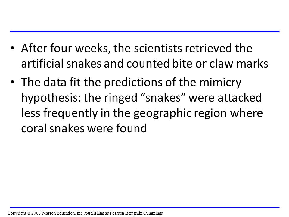 After four weeks, the scientists retrieved the artificial snakes and counted bite or claw marks The data fit the predictions of the mimicry hypothesis: the ringed snakes were attacked less frequently in the geographic region where coral snakes were found Copyright © 2008 Pearson Education, Inc., publishing as Pearson Benjamin Cummings