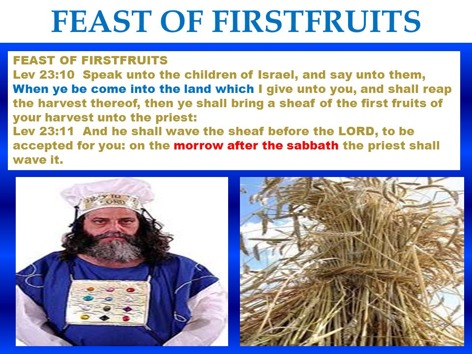 FEAST OF FIRSTFRUITS Lev 23:10 Speak unto the children of Israel, and say unto them, When ye be come into the land which I give unto you, and shall re