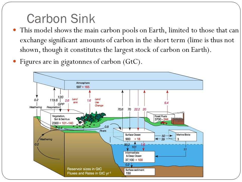 Carbon Sink This model shows the main carbon pools on Earth, limited to those that can exchange significant amounts of carbon in the short term (lime is thus not shown, though it constitutes the largest stock of carbon on Earth).