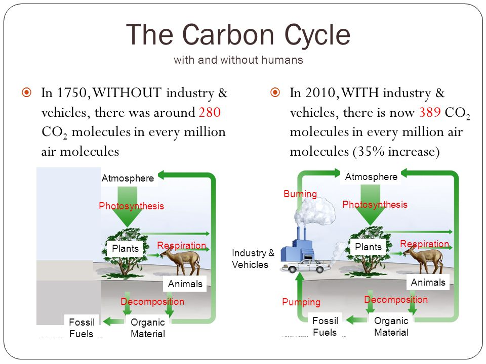 The Carbon Cycle with and without humans  In 1750, WITHOUT industry & vehicles, there was around 280 CO 2 molecules in every million air molecules  In 2010, WITH industry & vehicles, there is now 389 CO 2 molecules in every million air molecules (35% increase) Plants Animals Industry & Vehicles Organic Material Fossil Fuels Atmosphere Photosynthesis Respiration Decomposition Burning Pumping Plants Animals Organic Material Atmosphere Respiration Decomposition Photosynthesis Fossil Fuels