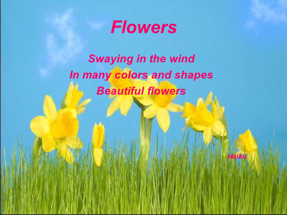 Flowers Swaying in the wind In many colors and shapes Beautiful flowers Haiku