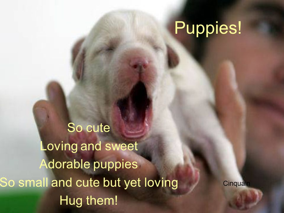 Puppies. So cute Loving and sweet Adorable puppies So small and cute but yet loving Hug them.