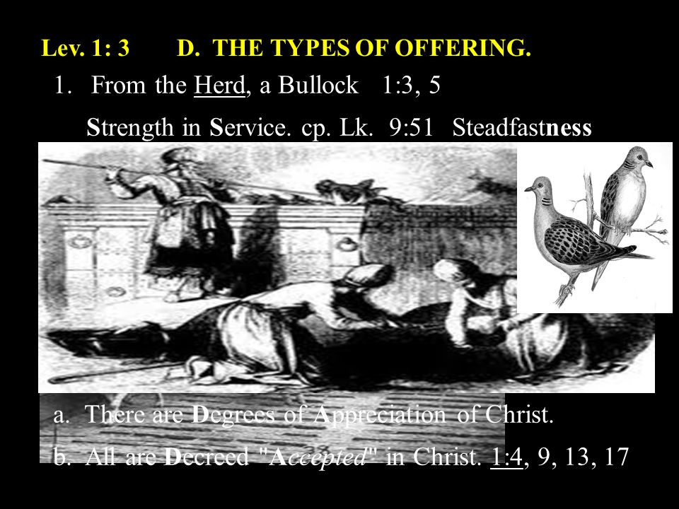 Lev.1: 3D. THE TYPES OF OFFERING. 1.From the Herd, a Bullock 1:3, 5 Strength in Service.