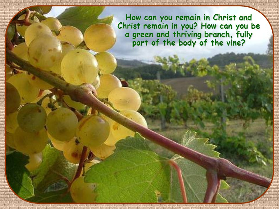 """I am the vine, you are the branches. Those who abide in me and I in them bear much fruit, because apart from me you can do nothing"""