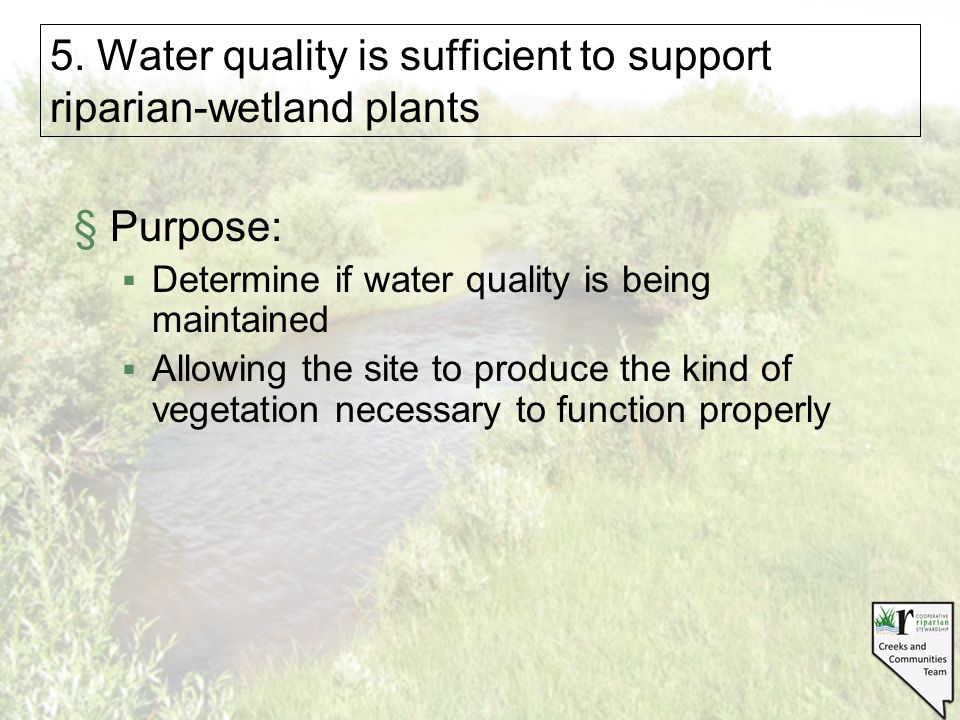 5. Water quality is sufficient to support riparian-wetland plants §Purpose:  Determine if water quality is being maintained  Allowing the site to pr