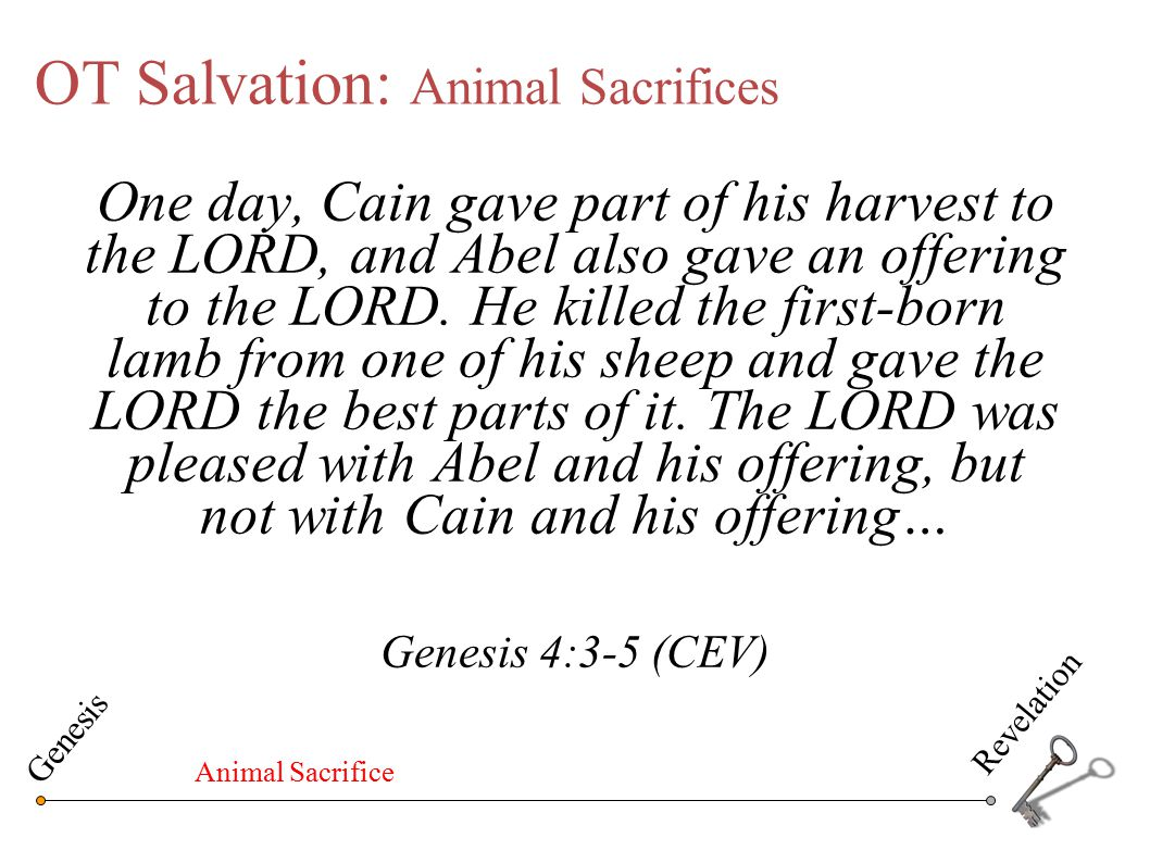 OT Salvation: Animal Sacrifices One day, Cain gave part of his harvest to the LORD, and Abel also gave an offering to the LORD. He killed the first-bo