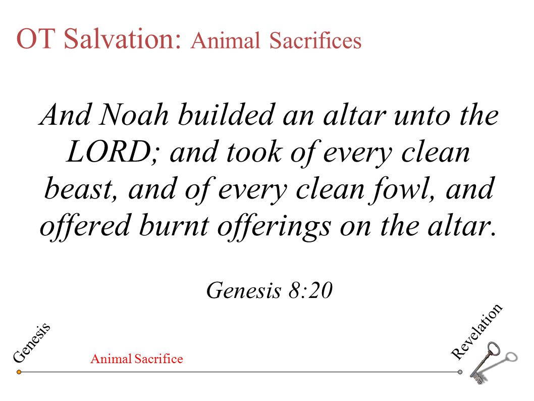 OT Salvation: Animal Sacrifices The Law of Moses is like a shadow of the good things to come…it cannot free people from sin by the sacrifices that are offered year after year…the blood of bulls and goats cannot take away sins…we are made holy because Christ obeyed God and offered himself once for all…By his one sacrifice he has forever set free from sin the people he brings to God Hebrews 10:1-14 (CEV) Genesis Revelation Animal Sacrifice