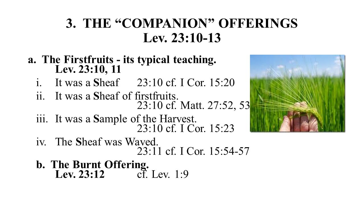 3. THE COMPANION OFFERINGS Lev. 23:10-13 a. The Firstfruits - its typical teaching.