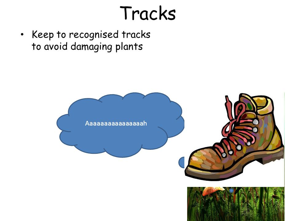 Tracks Keep to recognised tracks to avoid damaging plants Aaaaaaaaaaaaaaaah