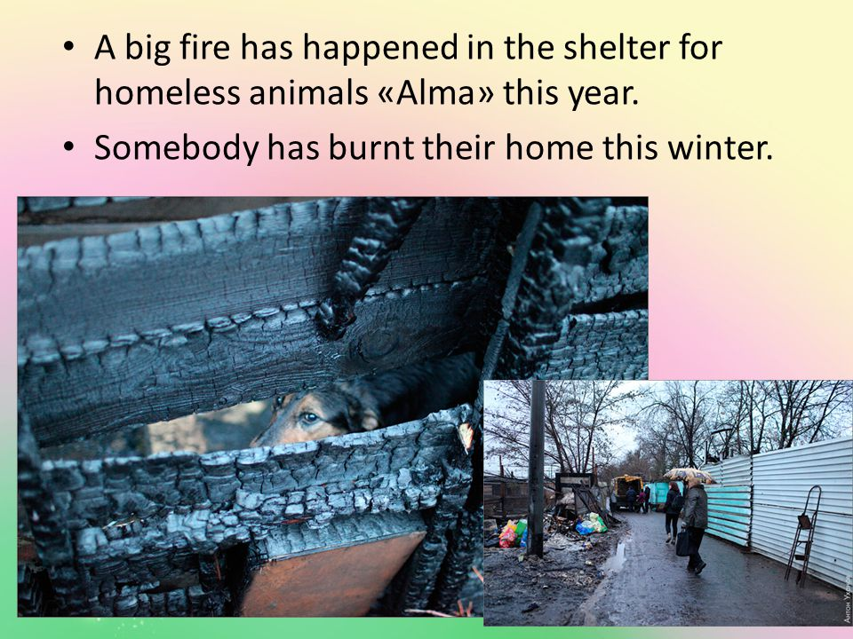 A big fire has happened in the shelter for homeless animals «Alma» this year.