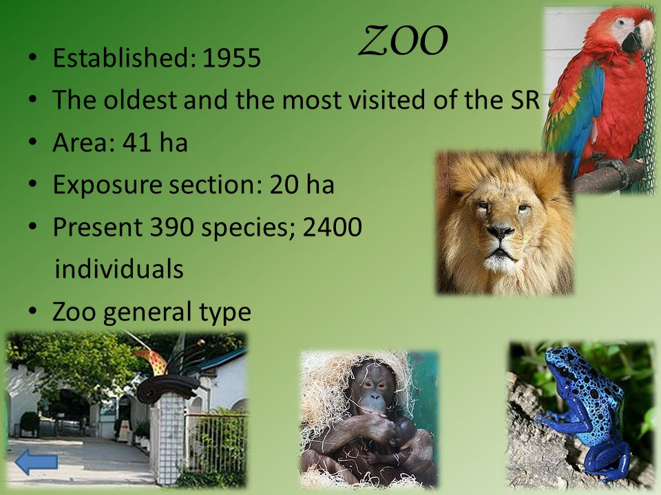 ZOO Established: 1955 The oldest and the most visited of the SR Area: 41 ha Exposure section: 20 ha Present 390 species; 2400 individuals Zoo general type