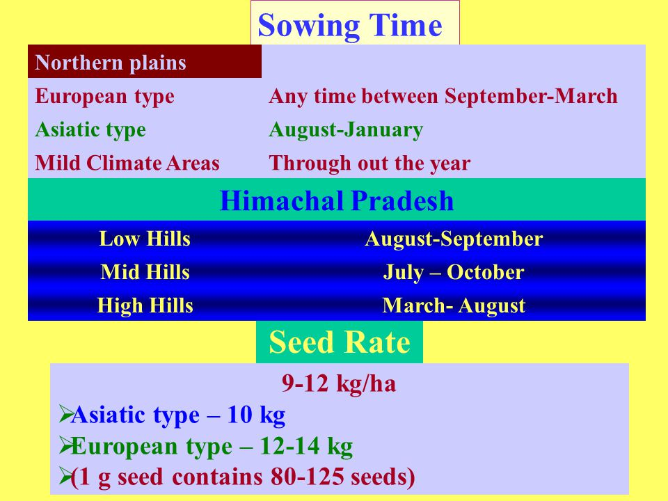 Sowing Time Seed Rate Northern plains European typeAny time between September-March Asiatic typeAugust-January Mild Climate AreasThrough out the year