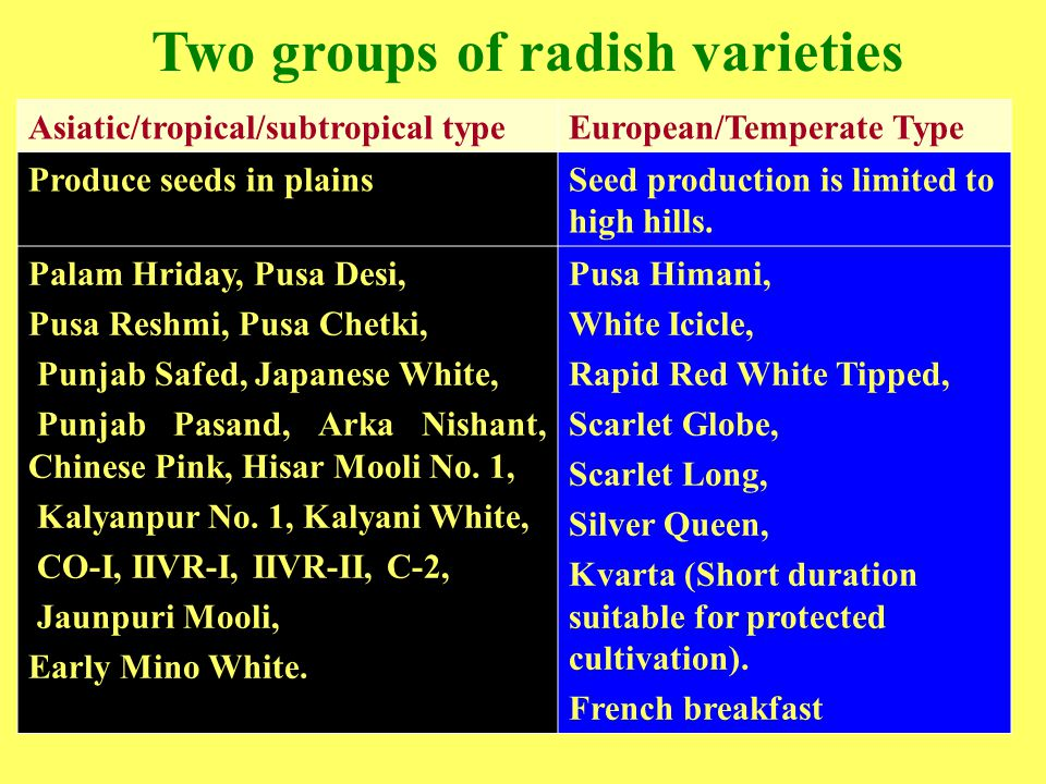 Two groups of radish varieties Asiatic/tropical/subtropical typeEuropean/Temperate Type Produce seeds in plainsSeed production is limited to high hill