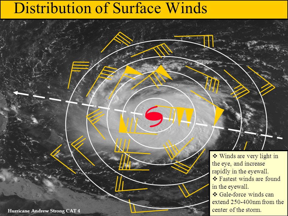   Distribution of Surface Winds Hurricane Andrew Strong CAT 4  Winds are very light in the eye, and increase rapidly in the eyewall.  Fastest wind