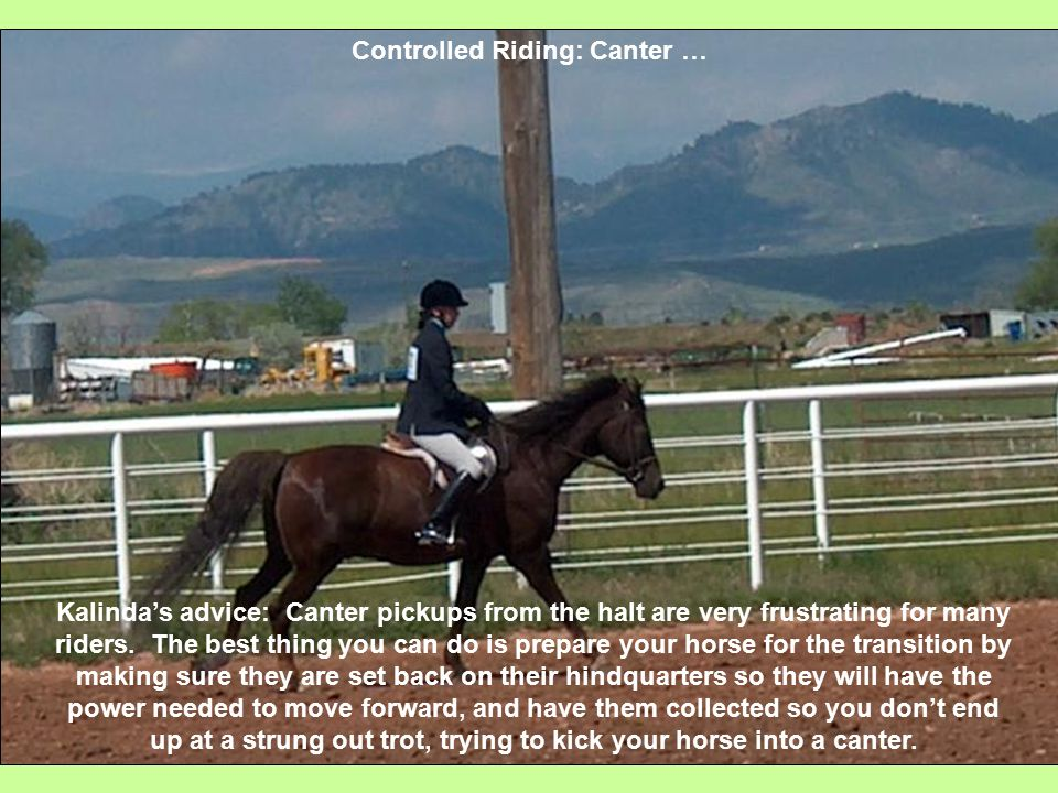 Controlled Riding: Canter … Kalinda's advice: Canter pickups from the halt are very frustrating for many riders.