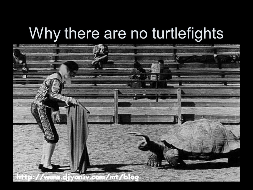 Why there are no turtlefights
