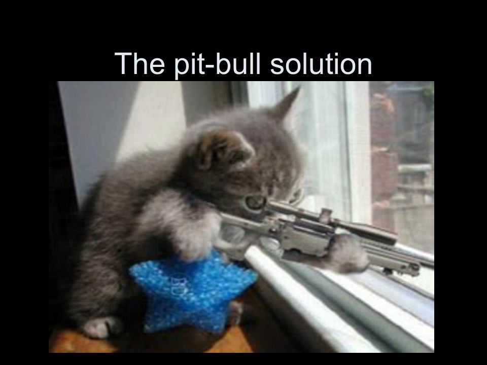 The pit-bull solution