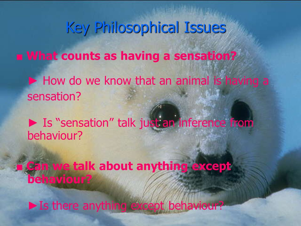 Sentience Based Ethics ■ Concept All and only sentient beings have moral standing.