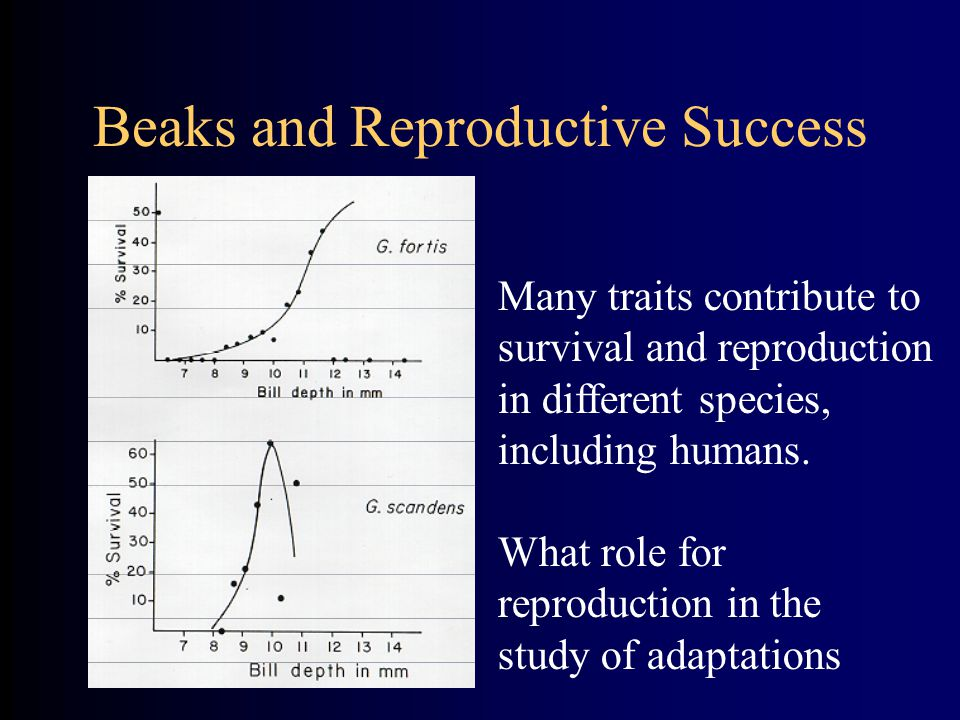 Beaks and Reproductive Success Many traits contribute to survival and reproduction in different species, including humans. What role for reproduction