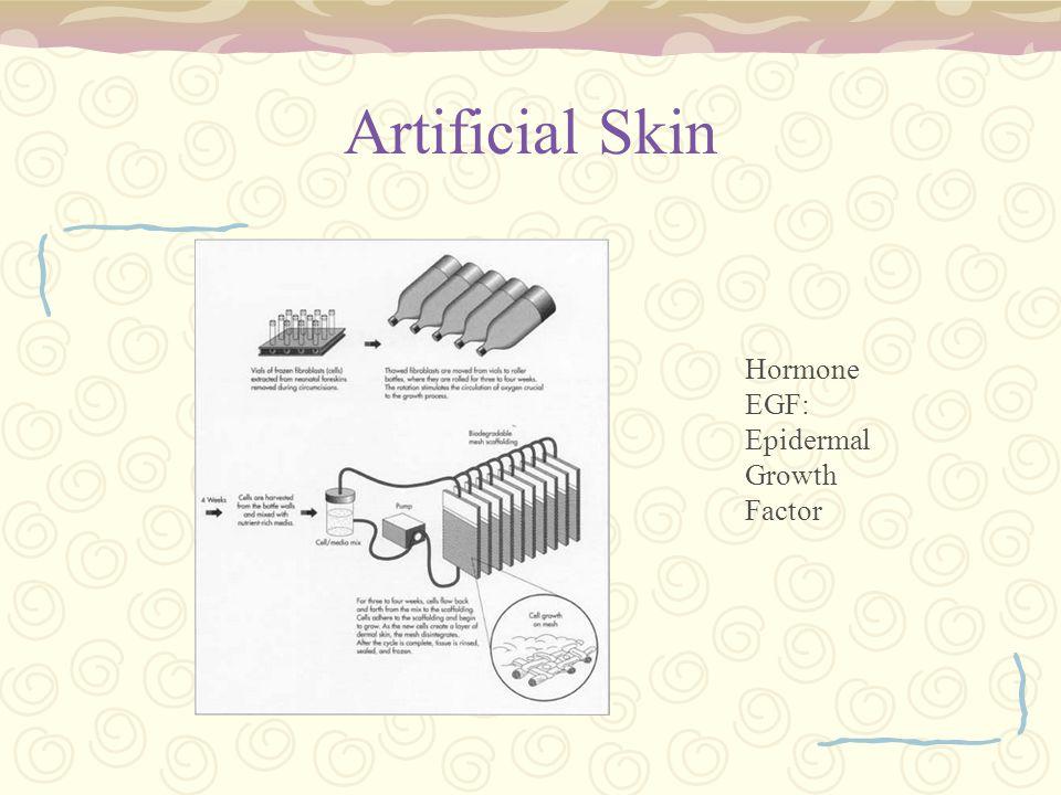 Artificial Skin Hormone EGF: Epidermal Growth Factor