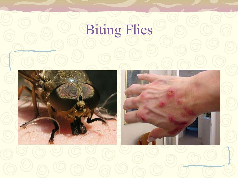 Biting Flies
