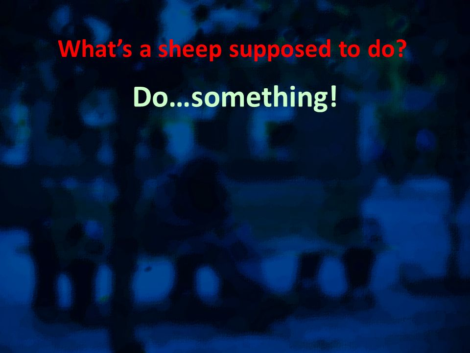 What's a sheep supposed to do Do…something!