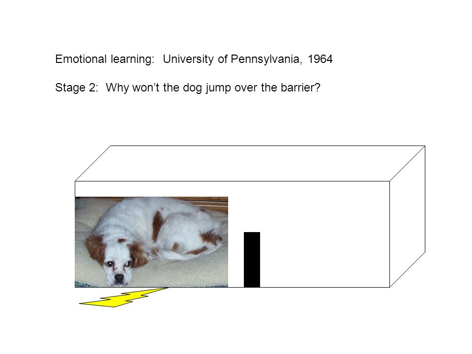 Emotional learning: University of Pennsylvania, 1964 Stage 2: Why won't the dog jump over the barrier?
