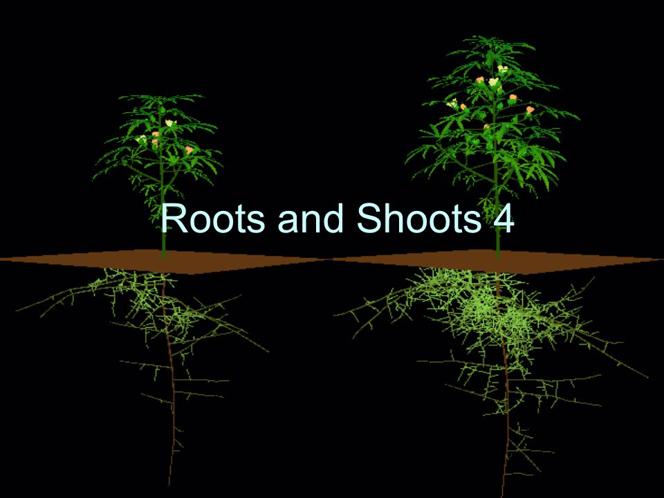 Roots and Shoots 4